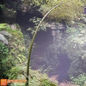 《僰王山飞雾洞》,有人说像阿凡达的潘...