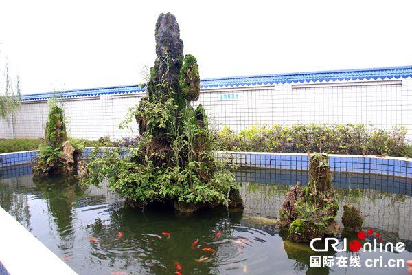 图片默认标题_fororder_绿化后孔滩镇自来水厂修建的生物观测池